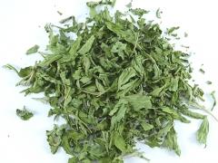 Stevia (Süsskraut), geschnitten, Algarve